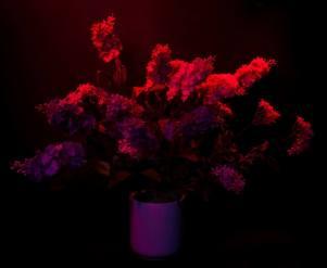 Light Painting flowers